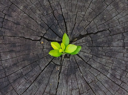 changing form: plant growing out of a tree stump