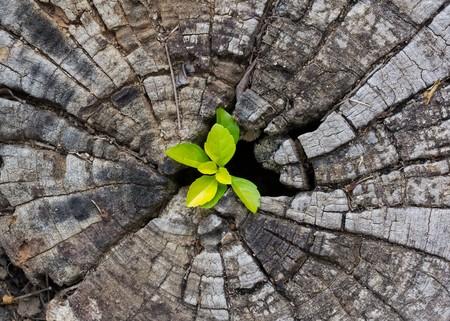 feuille arbre: plante qui pousse sur une souche d'arbre Banque d'images