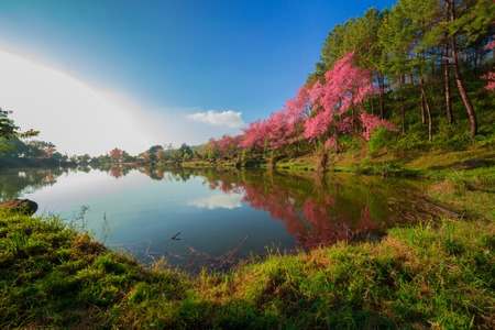 procesed: Beautiful spring colors Stock Photo