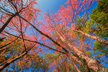 cross procesed: Beautiful spring colors Stock Photo