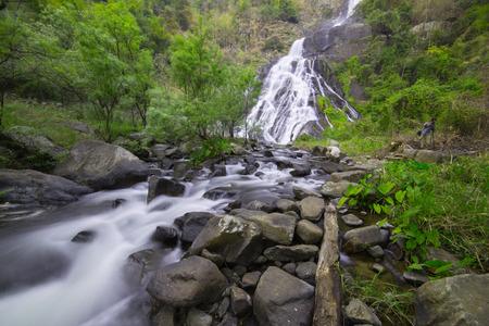 smokies: Waterfall in rain forest