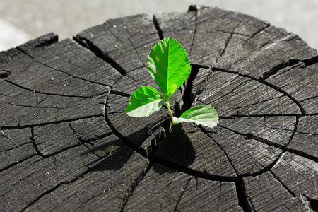 Green seedling growing from tree stump Stok Fotoğraf