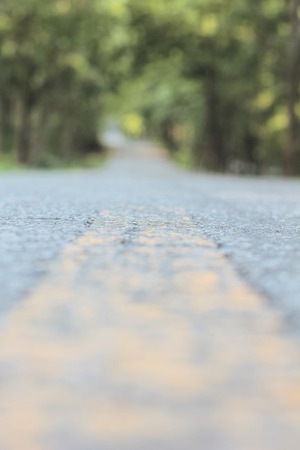 bigger picture: Road in forest Stock Photo