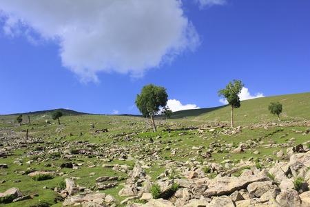 dandelion snow: Tree on hill