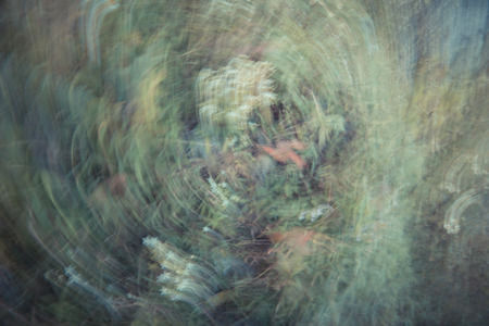 procesed: Spin Multiple Exposure of wild flowers Stock Photo