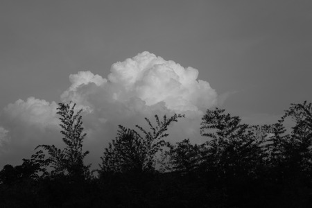 storm cloud: Storm Cloud with Silhouette Branch