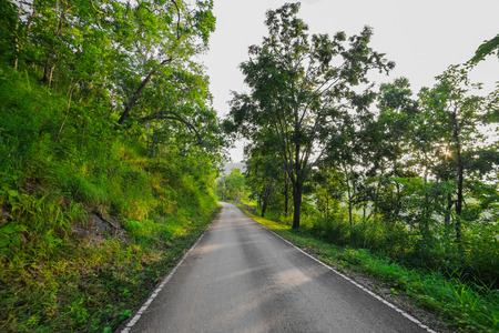 the bigger picture: Road in forest Stock Photo