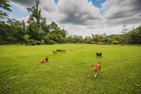 romp: Dogs romp in the yard