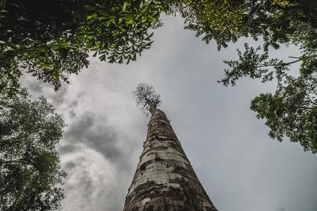 梅雨空を背景の木の枝 ロイヤリ...