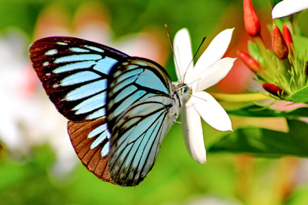 mariposa: mariposa