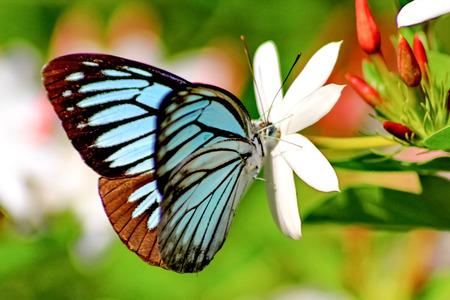 Papillon Banque d'images - 36968438