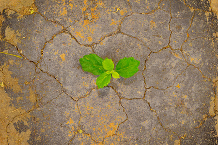 green plant growing between the cracks of a arid and dry desert