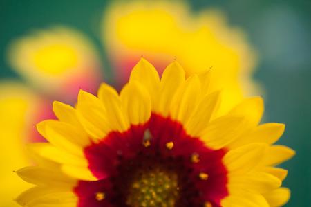 cross procesed: Flowers Stock Photo