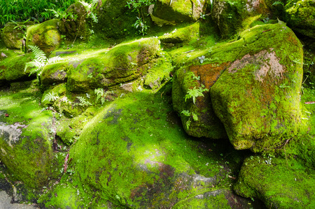 mosses: Moss covered stone Stock Photo