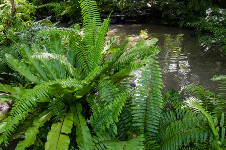 Fern in rainforest Stock fotó