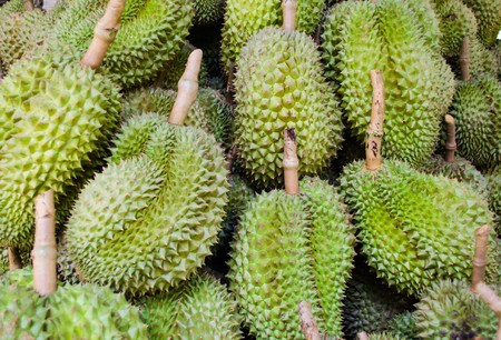 southeast: Durian nature fruit in southeast asia