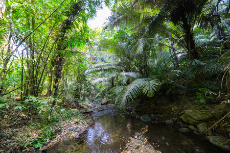 directly below: Tropical Rainforest Stock Photo