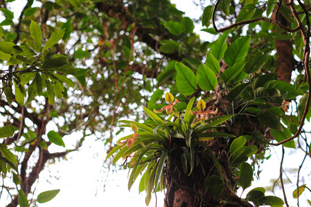 platycerium: Orchids in the Rainforest