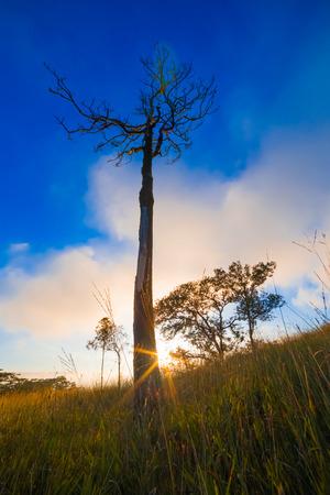toter baum: Morgenlicht �ber dem Gebiet und toter Baum Lizenzfreie Bilder