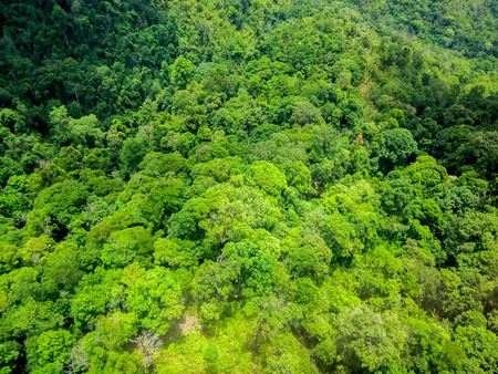 manchinchang: Aerial view of the forest
