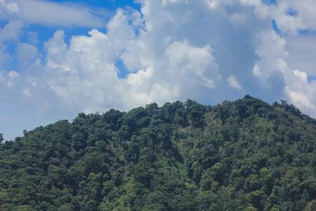 geoforest: rain forest