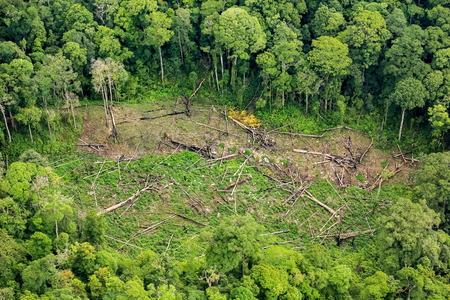 emergent: Rain forest destruction in Thailand form Aerial view