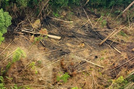 Rain forest destruction in Thailand form Aerial view