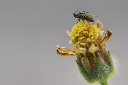 hairy legs: fly on flower