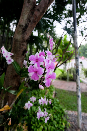 staghorn: Orchids in the garden