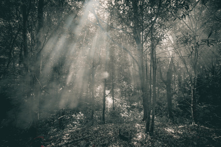 restful: Beautiful forest black and white Stock Photo