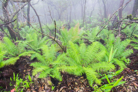 cycad: Cycad Plants in rain forest Stock Photo