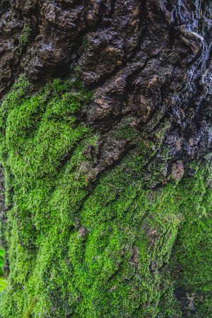 gray texture: Wood textured background with green moss
