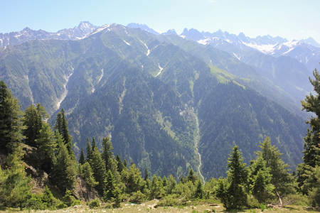 place to shine: The mountain valley covered pine forest