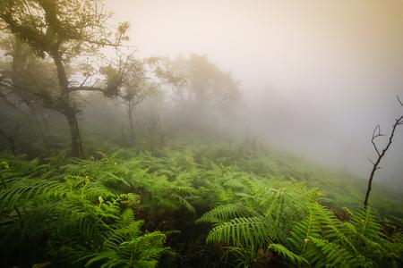 fog forest: Morning mist in rainforest Stock Photo