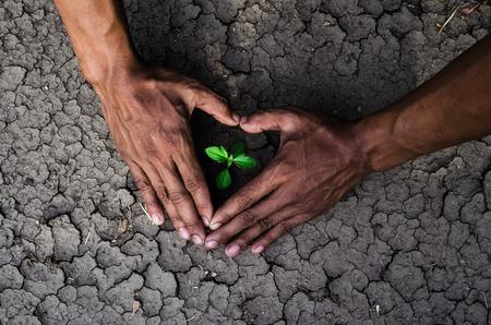 arboles secos: Manos formando una forma de corazón alrededor de un árbol que crece en la tierra agrietada