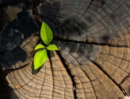 new idea: plant growing out of a tree stump