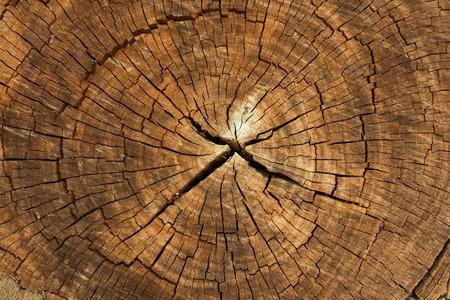 Dark brown tree trunk texture or background Standard-Bild