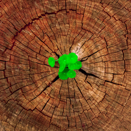 renewal: New development and renewal as a business concept of emerging leadership success as an old cut down tree and a strong seedling growing in the center trunk as a concept of support building a future.
