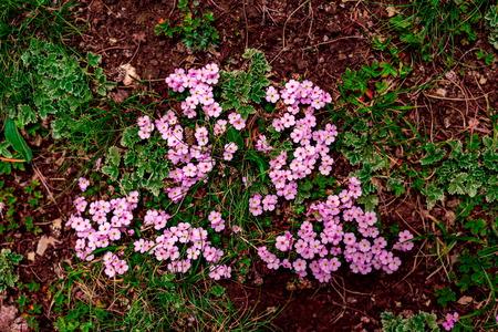 kashmir: kashmir floral