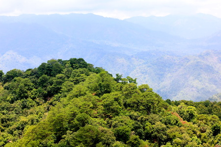 geoforest: Aerial view of the forest