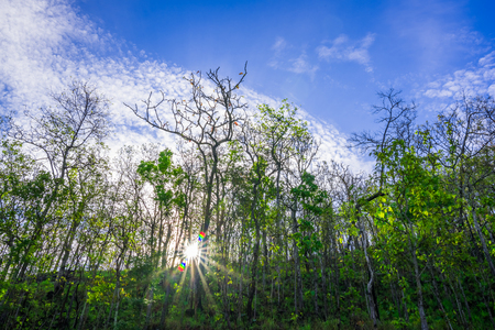 verticals: deep dense forest with sunrays shining Stock Photo
