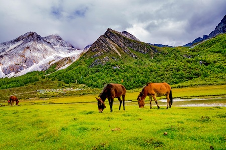 upland: Yading Nature Reserve. a famous landscape in Daocheng, Sichuan, China.