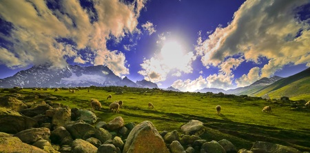 Sheep in the green hills of the mountains,Kashmir Stock Photo