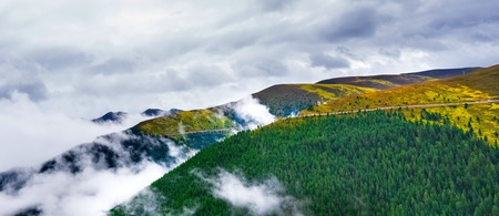 amazing stunning: fir trees on a meadow down the will to coniferous forest in foggy mountains of China