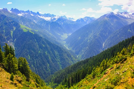 mountain valley covered pine forest