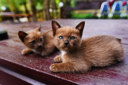 kitty cat: cute cat, Kitty cat