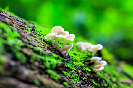 toadstool mushrooms in a forest in autumn(in soft selective focus)