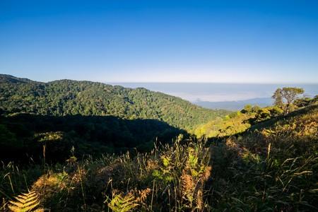 geoforest: Spectacular jungle landscape with mountain range