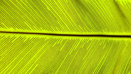 Close up green Birds nest fern leaf nature abstract background