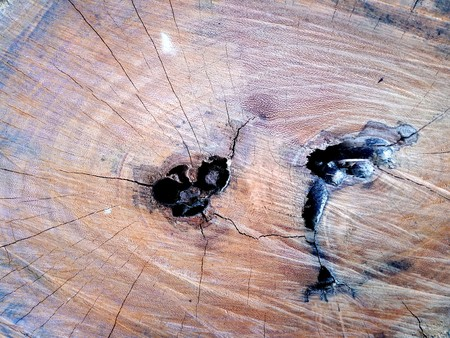 Background of wooden surface made of the ash-tree plank after primary coarse processing Standard-Bild